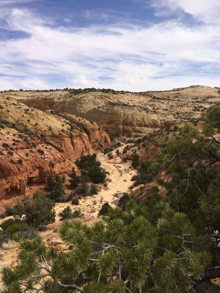 wild & woolly Grand Staircase-Escalante landscape